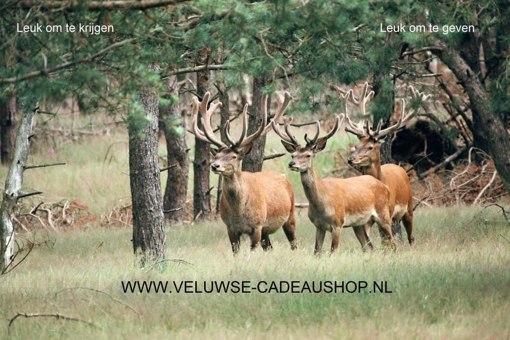 Veluwse Cadeaushop logo